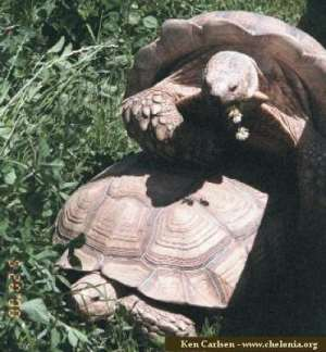 World Chelonian Trust Differentiating Male And Female